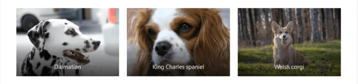 3 column Gallery of dogs: Dalmatian, King Charles spaniel and Welsh corgi