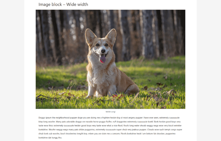 A Wide width landscape image of a corgi in Astra theme